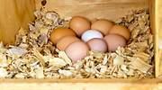 ¿Cuántos huevos puedo comer a la semana? ¿Son mejores los blancos o los marrones? Todo sobre este superalimento