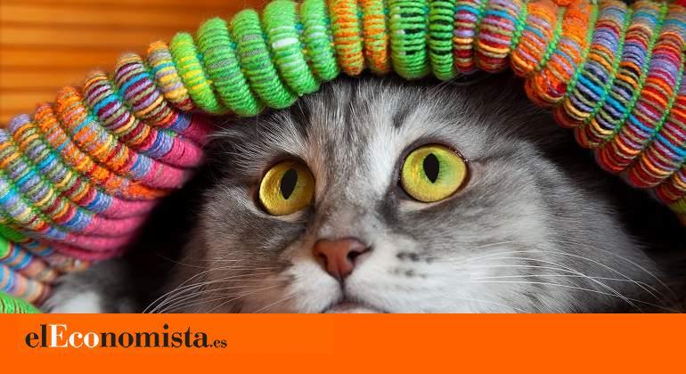 ¿Cuáles son los miedos más comunes de los gatos? ¿Cómo pueden superarlos?