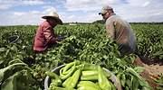 agroalimentos-mexico-reuters.jpg
