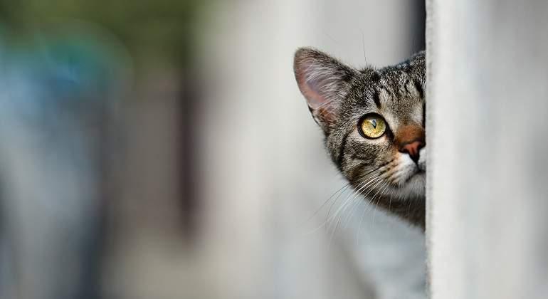 Gato-asomado.jpg