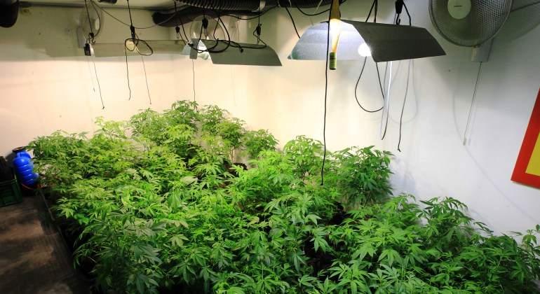 marihuana-plantacion-cultivo-club-marihuana-montevideo-uruguay-efe.jpg