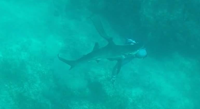 ataque-tiburon-cabeza-youtube.jpg