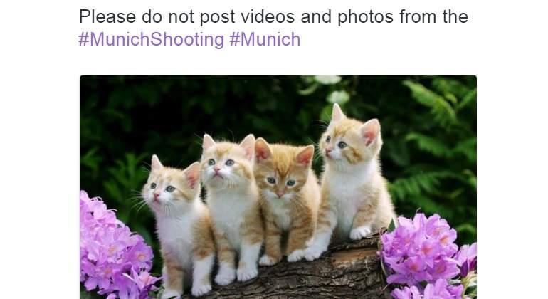 gatos-ataque-munich.jpg
