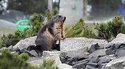 marmota-770-efe.jpg
