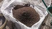 Llegan las granjas de insectos para alimentación animal
