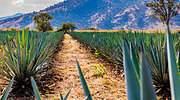 biodiversidad-agricultura-istock.jpg