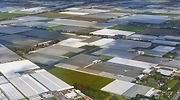 Cómo la pequeña Holanda se convirtió en una potencia agroalimentaria