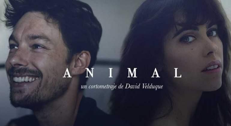 animal-cosmo.jpg