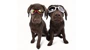 mascotas-navidad-archivo.png