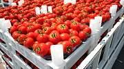tomates-770x420.jpg