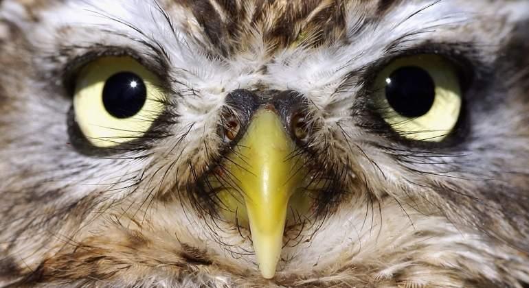 Así pierdes calidad de vida si vives como un ave nocturna