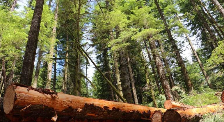 bosque-arbol-770.jpg