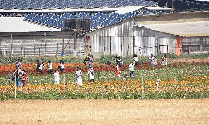 El Gobierno potenciará el autoconsumo con 'comunidades de energía renovable'