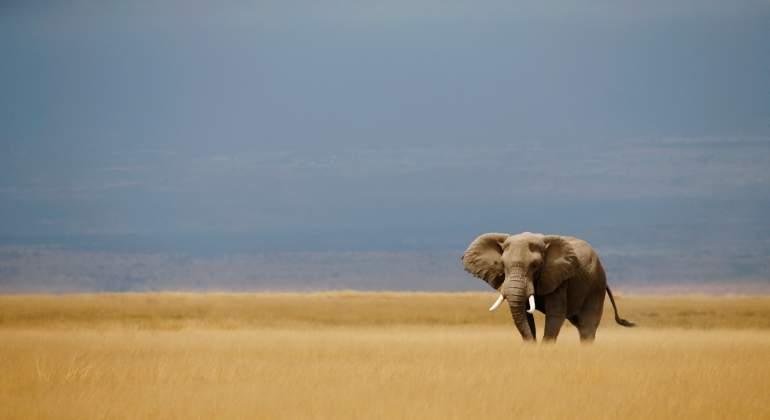 elefante-reuters.jpg