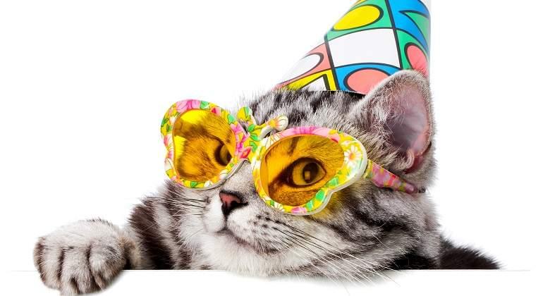 Gato-con-gafas-y-gorro-de-fiesta.jpg