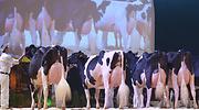 Los ganaderos piden a Planas que publique de una vez los costes de producción de la leche para firmar contratos