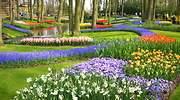 770x420-jardin-holanda-dreamstime.jpg
