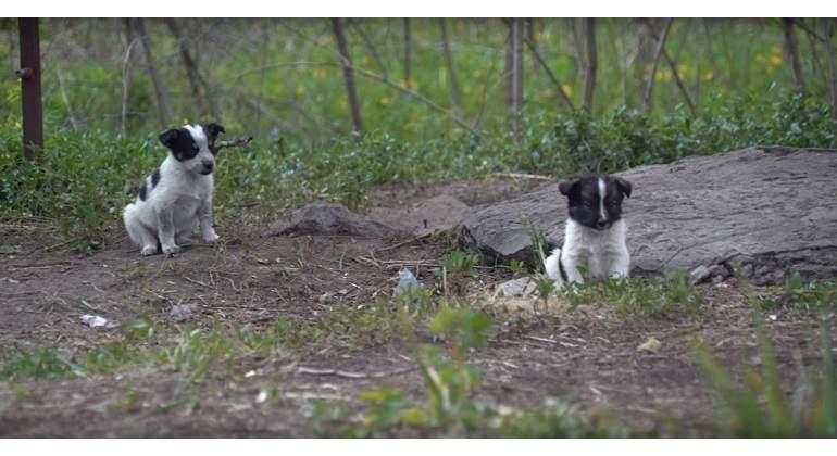 Parecen adorables, pero no puedes ni tocar estos cachorros