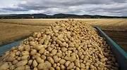 patatas-en-campo-1.jpg