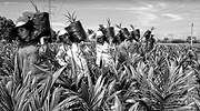 Fedepalma abre convocatoria del concurso de fotografía ambiental