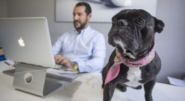 perro-trabajo.jpg