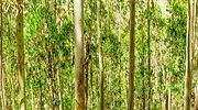 Ence, aliado de los bosques en la generación renovable