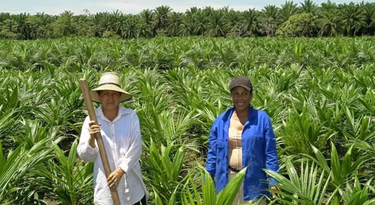 palma sostenible