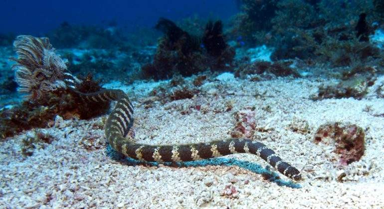 serpiente-marina-dreamstime.jpg