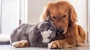 mascotas-archivo.png