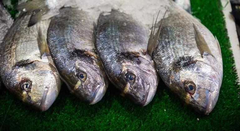 pescado-dreamstime.jpg