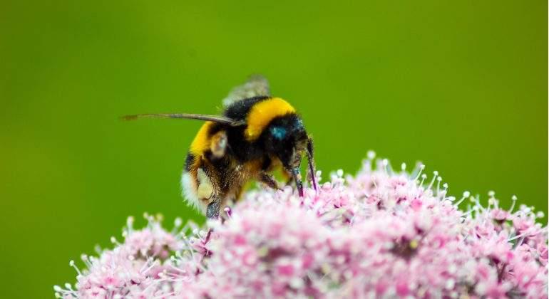 veneno-abeja-cura-pieles-atopicas.jpg