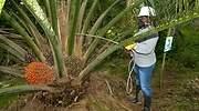 Empresas palmeras colombianas donaron $4.000 millones durante pandemia en 2020