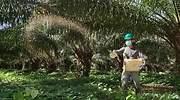 Con agroindustria frente a Covid-19 y cambio climático avanza Congreso de palmicultores
