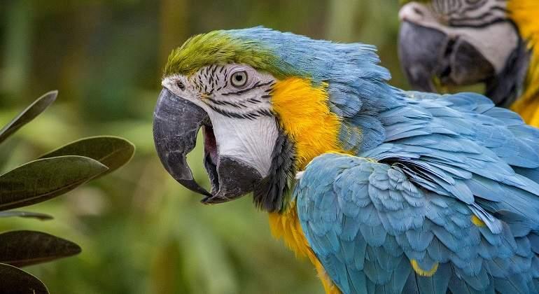 macaw-508877_1920.jpg