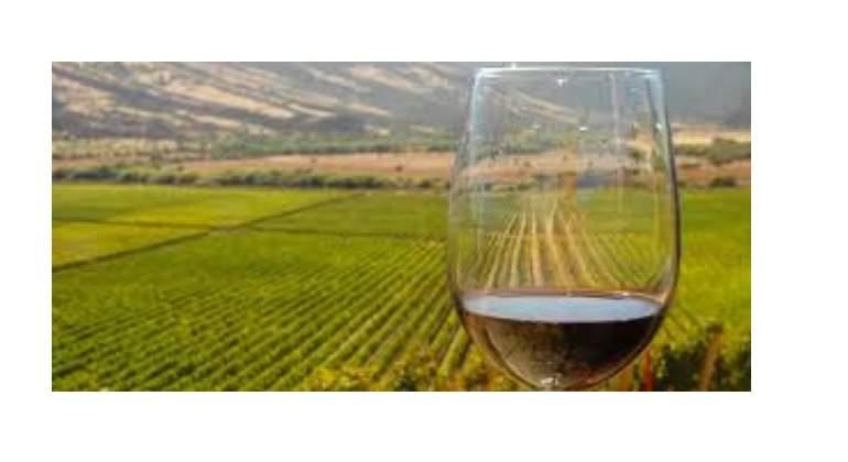 vinos.jpg