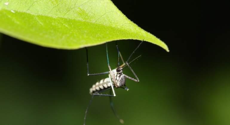 mosquito-malaria-dreamstime.jpg