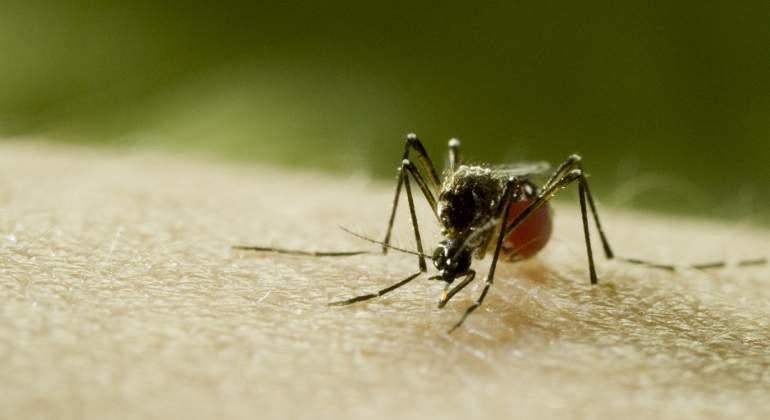 mosquito-documental-discovery.jpg