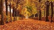Paseo-lleno-de-hojas-en-otono-iStock.jpg