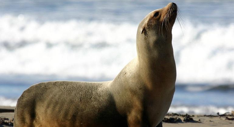 Las especies m�s antiguas son las m�s propensas a adaptarse al cambio clim�tico futuro
