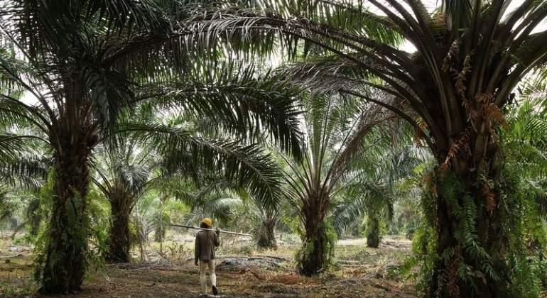 plantaciones-palma.jpg