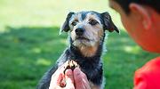 perro-cuidados-archivo.png