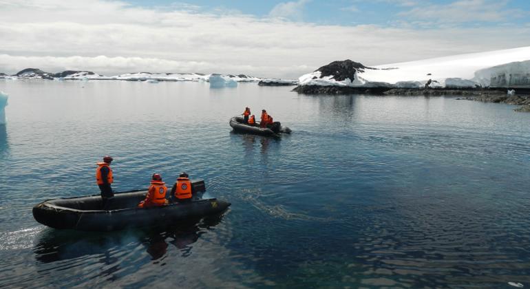 Los mejillones podrían invadir la Antártida y dañar su diversidad