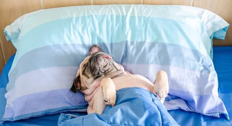 Perro-durmiendo-en--una-cama.jpg