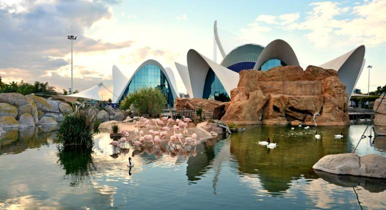 oceanographic-valencia-dreams.jpg