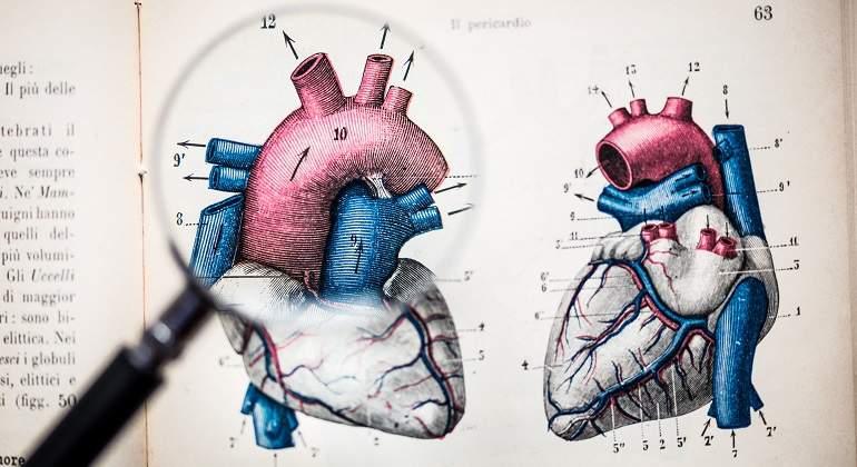 Anatomia-corazon-lupa.jpg