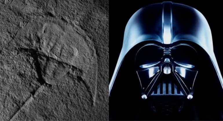 Así es el sorprendente fósil de Darth Vader del período Triásico