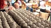 huevo-770-ntx.jpg
