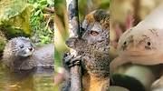 Collage-de-animales-que-se-extinguiran-iStock-ViralPlus.jpg