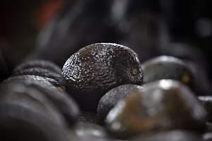 800 kilos de coca entre aguacates