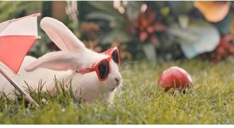 Conejo-polonia-770.jpg